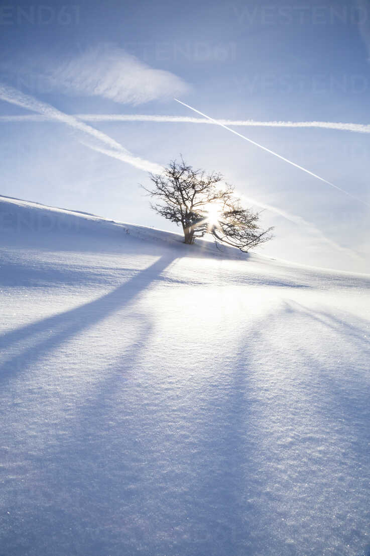 Germany, Baden-Wurttemberg, Swabian Mountains, Tree in snow covered landscape - LVF002842 - Larissa Veronesi/Westend61