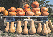 Greece, pumpkins at market - DEGF000167