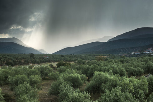 Greece, olive orchard - DEGF000197
