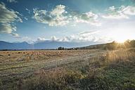 Bulgaria, grazing flock of sheep at sunset - DEGF000185