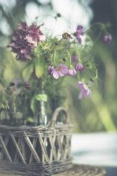 Purple blossoms of Cosmea - ASCF000038