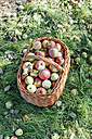 Germany, Hesse, apples in wickerbasket - IPF000187