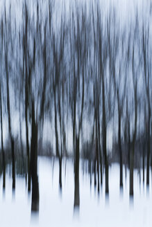Trees in winter, blurred - AKNF000002