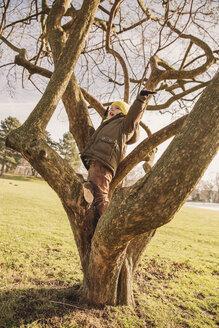 Little boy climbing on a tree in winter - MFF001497