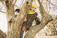 Happy little boy climbing on a tree in winter - MFF001500