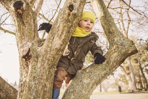 Happy little boy climbing on a tree in winter - MFF001500