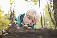 Little boy watching mushrooms with magnifying glass in a forest - PDF000811