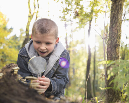 Little boy watching mushrooms with magnifying glass in a forest - PDF000826