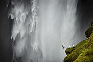 Iceland, Skoga, gulls in front of Skogafoss waterfall - STCF000093