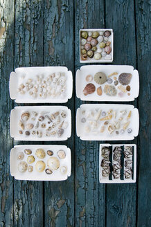 Boxes with different mussels and snail-shells - GIS000003