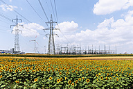 Austria, Burgenland, sunflower field and wind farm Moenchhof-Halbturn - SIEF006492