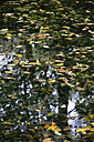 Germany, Bavaria, Riem, surface of a lake with leaves - AX000746