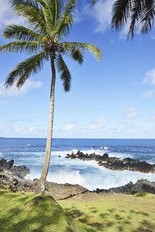 USA, Hawaii, Maui, Nahiku, palm tree at the coast - BRF001093