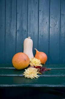 Autumnal decoration, Dahlia and ornamental pumpkins, blue wooden wall - GIS000010