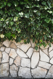 Typical Italian stone wall with hedge - GS000944