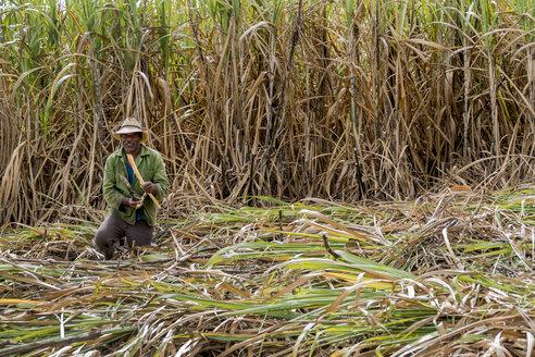 Cuba, farmer cutting sugar cane - EJW000681