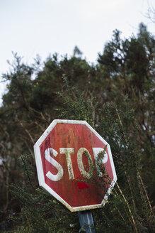 Spain, Galicia, Ferrol, stop signal hidden by vegetation - RAEF000064