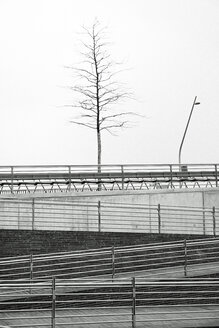 Germany, Hamburg, HafenCity, New University, pedestrian walkway and bare tree - HLF000839