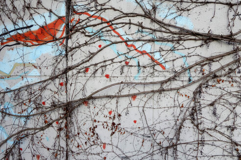 Graffiti at concrete wall with creeping plant - NDF000523