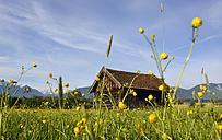 Germany, Bavaria, hay barn at Murnauer Moos - LHF000434