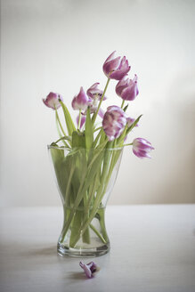 Flower vase with wilted tulips - CHPF000093