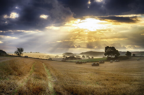 UK, Scotland, East Lothian, harvested fields - SMAF000312