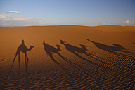 Morocco, Sahara, shadow of camels in desert - STDF000134