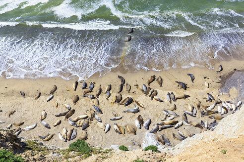 USA, California, Marin County, Point Reyes National Seashore, View to beach with sea elefants - FOF007775