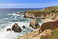 USA, California, Pacific Coast, Sonoma County, Sonoma Coast State Beach, Bodega Head - FOF007780
