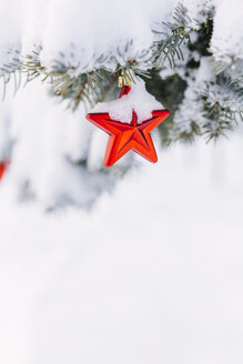Star-shaped christmas bauble hanging on evergreen tree - BZF000070