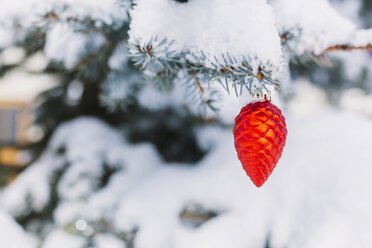 Cone-shaped christmas bauble hanging on evergreen tree - BZF000071