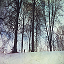 Germany, near Wuppertal, silhouettes, man in forest and birds in winter - DWI000444