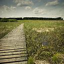 Belgium, High Fens, wooden boardwalk - DWIF000456