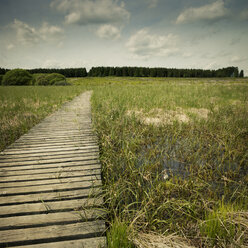 Belgium, High Fens, wooden boardwalk - DWIF000456