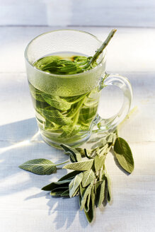 Glass of hot sage tea and fresh sage - KSWF001432