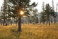 USA, Wyoming, Yellowstone National Park, sun with sunbeams in forest in autumn - RUEF001555