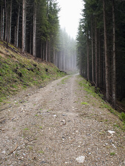 Austria, Maria Alm, forest track in autumn - NNF000195