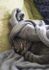 Tabby cat resting on a sofa - RAEF000079