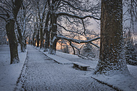 Germany, Baden-Wuerttemberg, Winter on Mainau Island, alley in the evening - KEB000062
