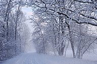 Germany, Gelting, snow-covered trees - SIEF006525