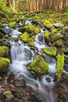 USA, Washington State, Olympic National Park, View of sol duc river, Cascade - FOF007886