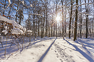 Germany, Baden-Wuerttemberg, Swabian Alps, footmarks in snow in forest against the sun - WDF002993