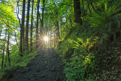 USA, Oregon, Columbia River Gorge, Multnomah County, hiking trail in forest against the sun - FOF007914