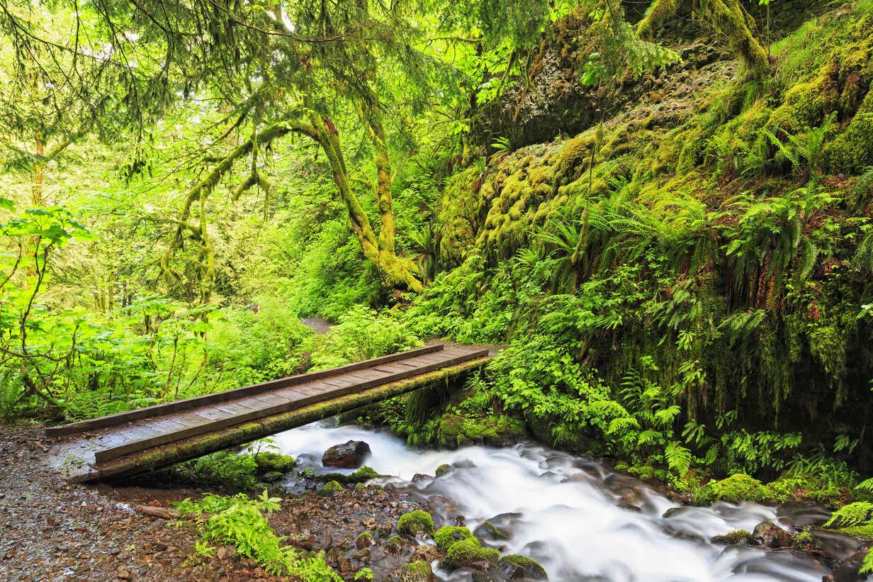 USA, Oregon, Multnomah County, Columbia River Gorge, Bridge over Wahkeena Creek - FOF007902 - Fotofeeling/Westend61