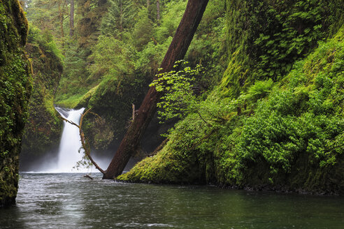 USA, Oregon, Hood River County, Columbia River Gorge, Punch Bowl Falls - FOF007889