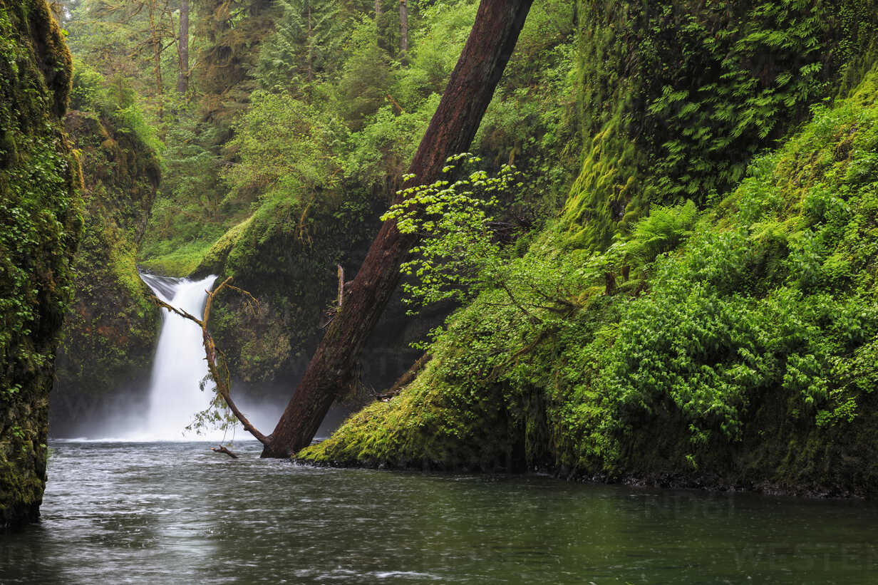 USA, Oregon, Hood River County, Columbia River Gorge, Punch Bowl Falls - FOF007889 - Fotofeeling/Westend61