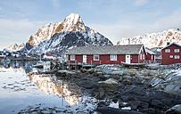 Norway, Lofoten, Reine, view to harbour at sunrise - MKFF000187