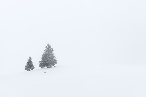 Switzerland, Canton of St. Gallen, Alp near Toggenburg in winter, Conifers - KEBF000081