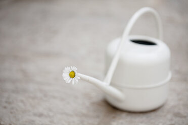 Daisy blossom in white watering can on stone floor - LSF000028