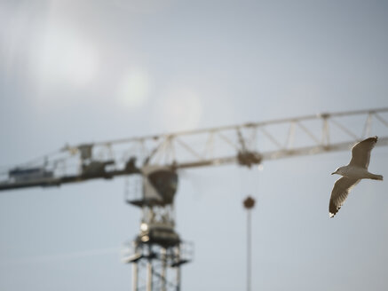 Germany, seagull flying in front of construction crane - KRPF001397